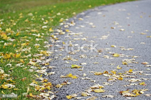 Orange, yellow and golden colored autumn leaves are scattered along a rural road - deliberate foreground focus with shallow depth of field.