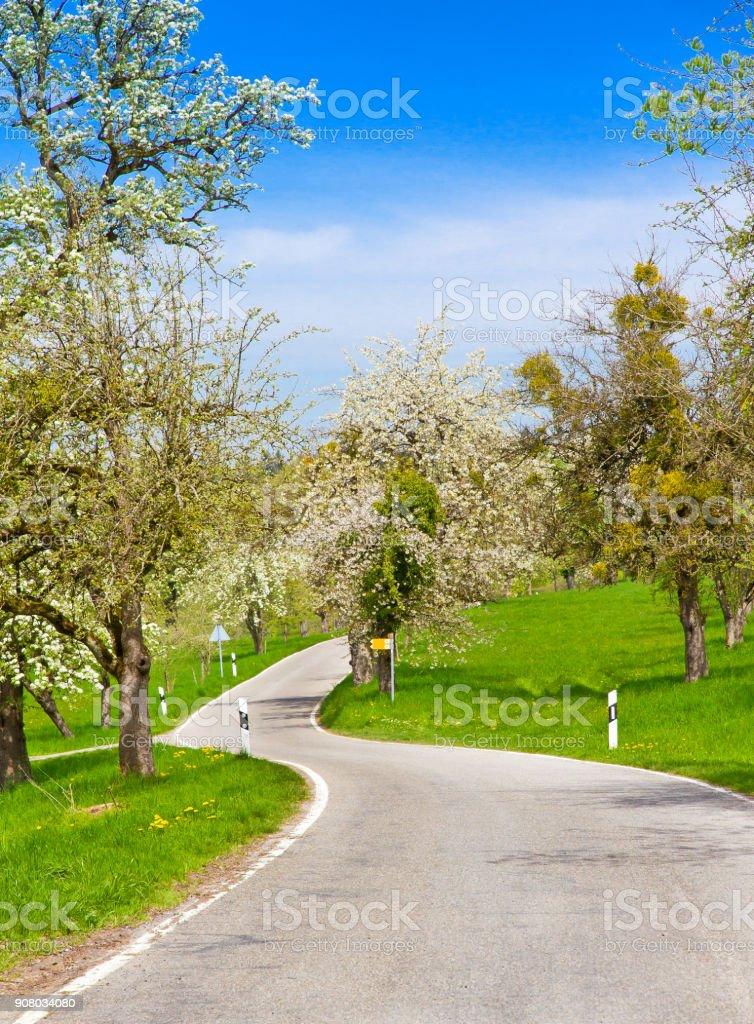 Rural road in springtime стоковое фото