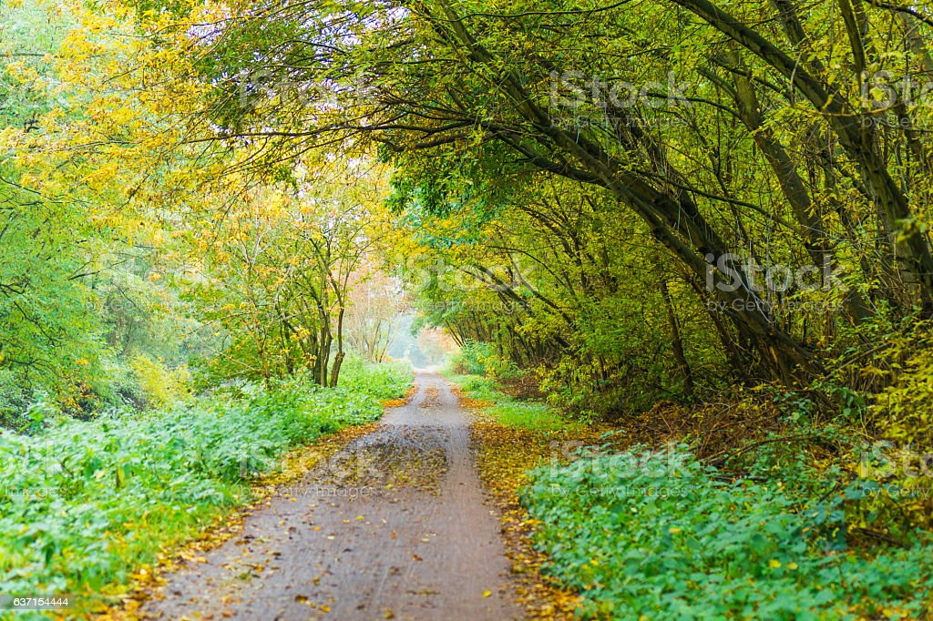 Rural road meandering through autumn woodland stock photo