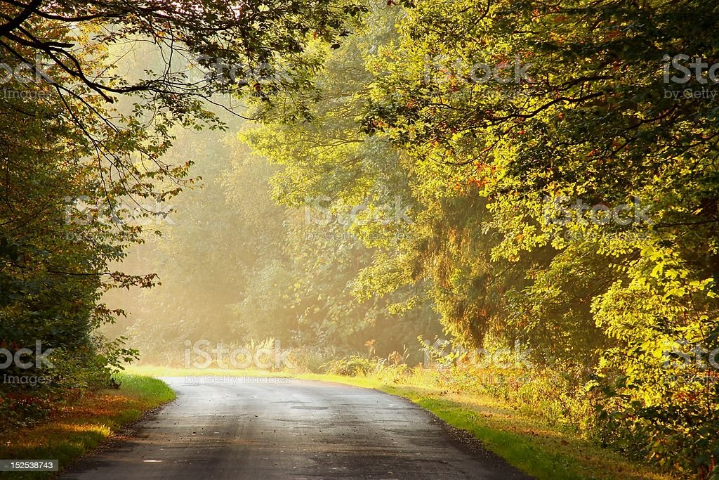 Rural road leading through a picturesque autumn woods at dawn. Photo...