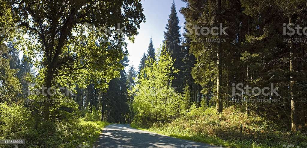 Rural road through green forest royalty-free stock photo