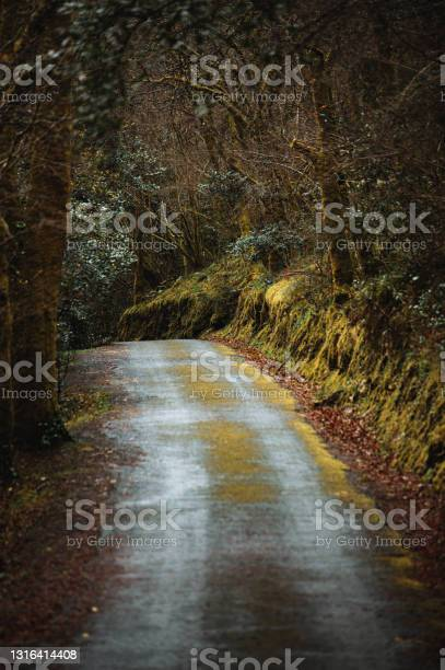 Photo of Rural road through thick autumn forest
