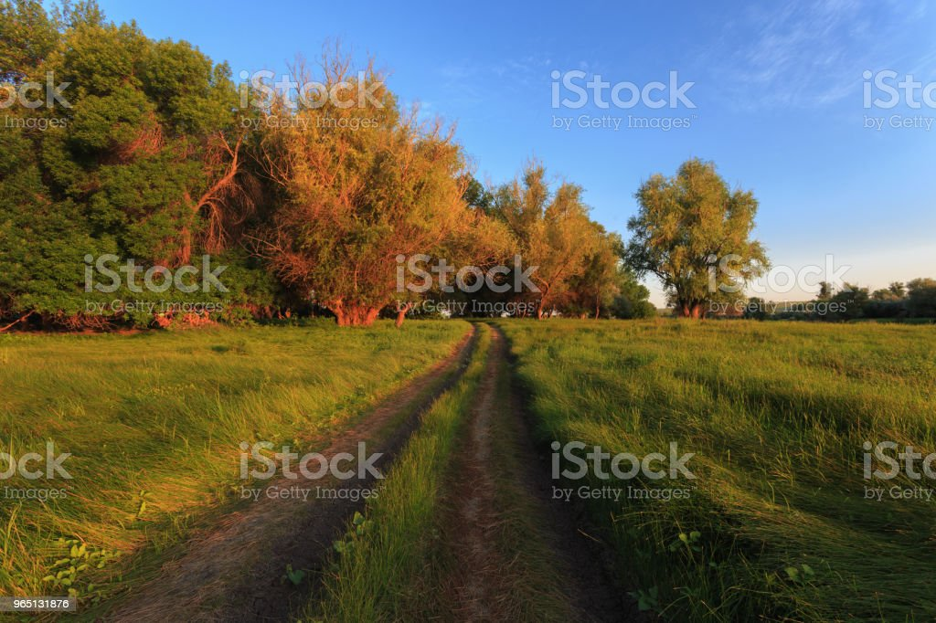 Rural road to the forest and the blue sky without clouds, the sides of the growing bright green grass. The dawn of early morning royalty-free stock photo