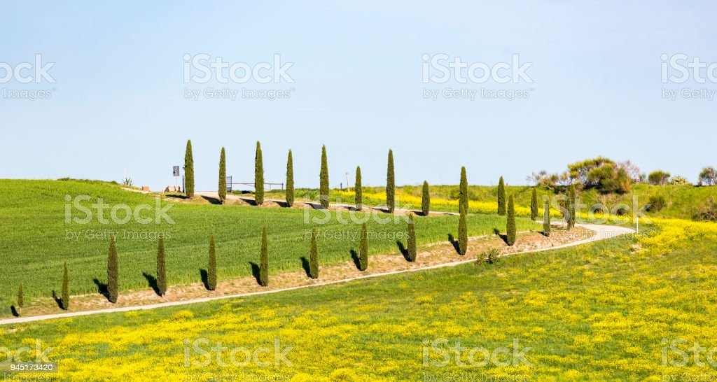 Rural road with cypresses in the country stock photo