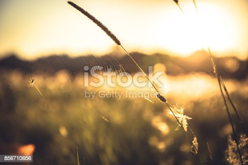 istock Rural rustic background at countryside summer field during sunset  with blurred background with back light in yellow colors 856710656