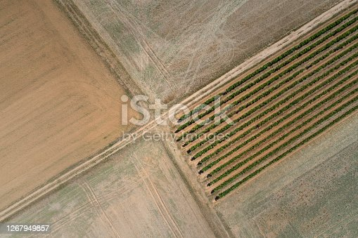 Rural scene - agricultural fields, aerial view
