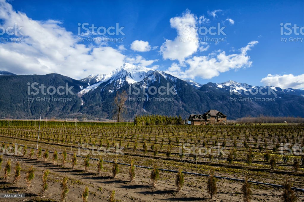 Rural scene at Fraser Valley, Agassiz, BC, Canada stock photo