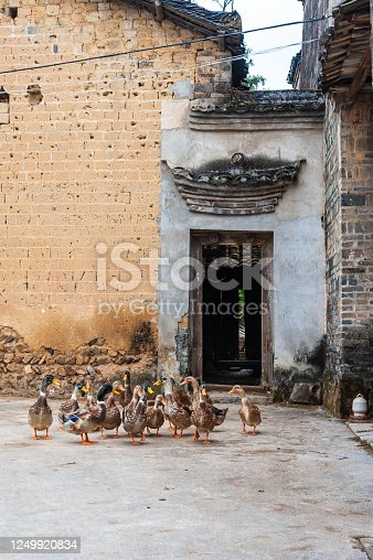 Rural scene in Chinese village, Guilin, China