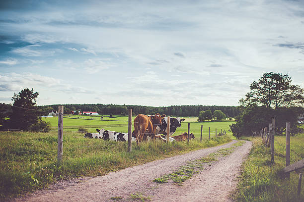 rural scene in sweden - summer sweden bildbanksfoton och bilder