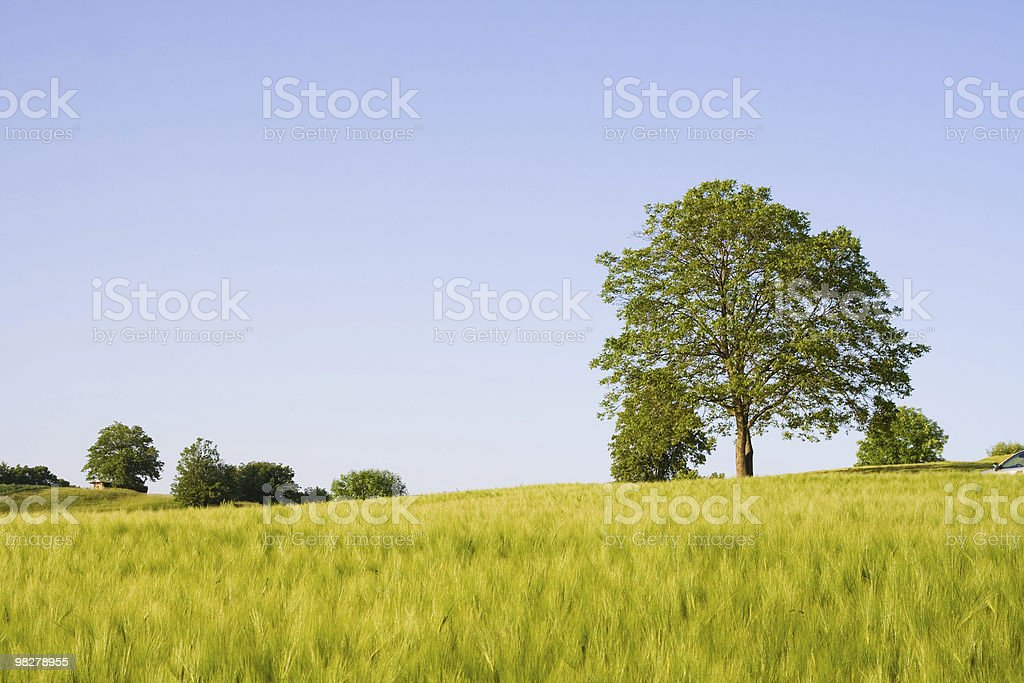 Rural scene royalty-free stock photo