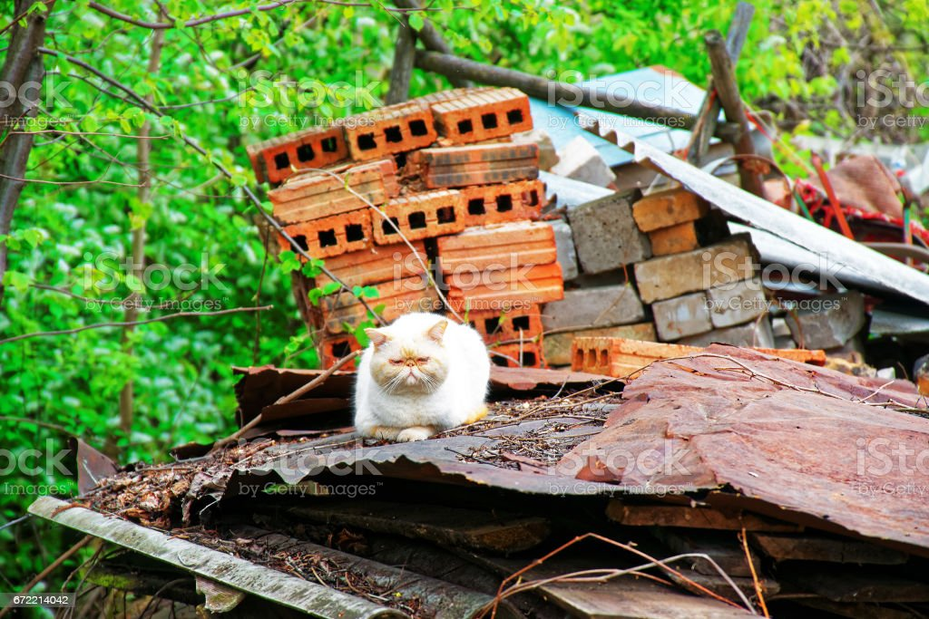 Rural scene with cat on rusty metal in Vilnius countryside stock photo