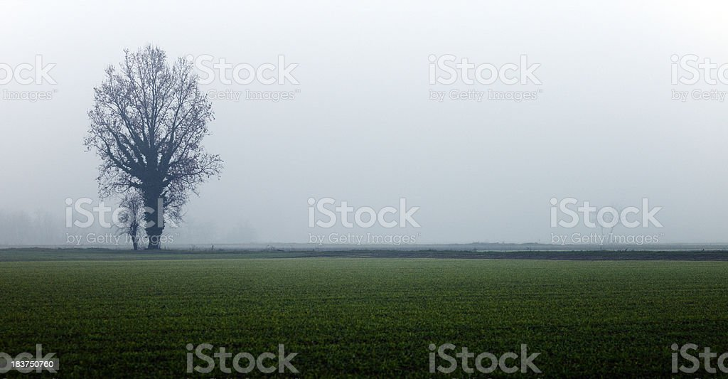 Rural Scene with Fog. Color Image royalty-free stock photo