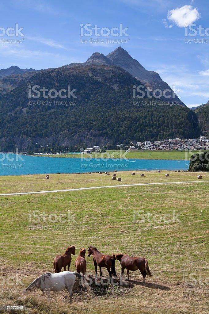 Rural Scenery near Silvaplana, top spot for Kitesurfers, Engadine, Switzerland. royalty-free stock photo