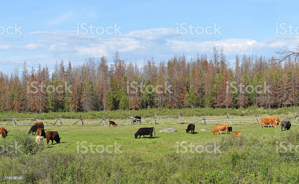Rural scenery royalty-free stock photo