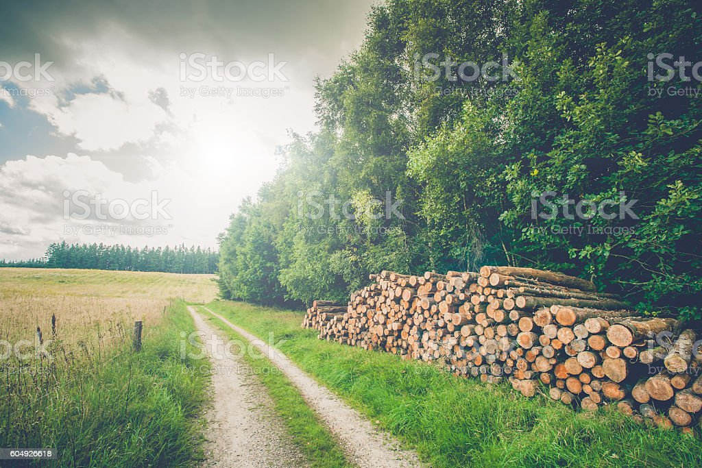 Rural scenery with wooden logs stock photo