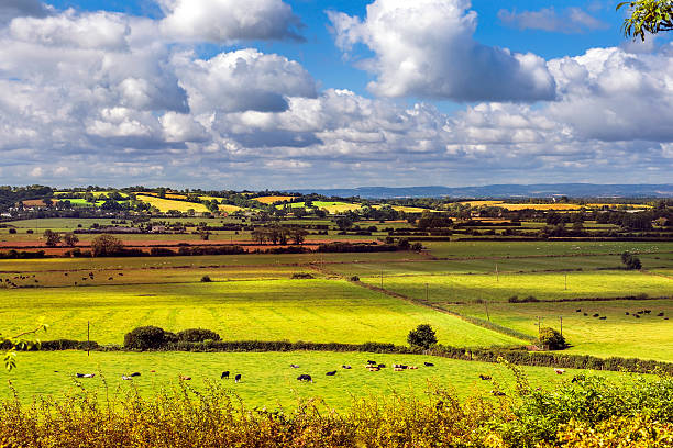 rural scenic view of green fields, Salisbury, England rural scenic view of green fields near the Salisbury in England somerset england stock pictures, royalty-free photos & images