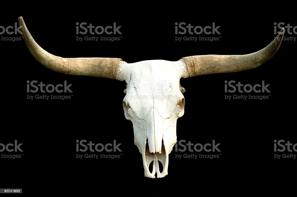 Rural - Skull On Black stock photo