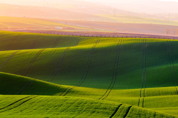 Rural spring agriculture texture background. Green waves hills in South Moravia, Czech Republic during sunset. Green fields landscape. Rural spring agriculture texture background. Green waves hills in South Moravia, Czech Republic during sunset. Green fields landscape moravia stock pictures, royalty-free photos & images