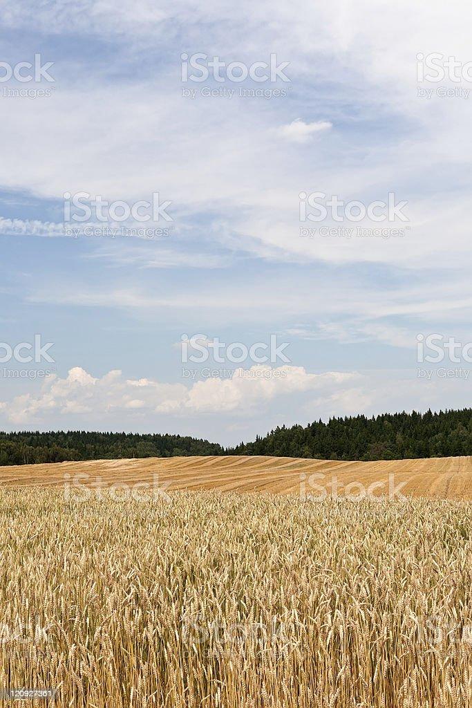 Rural summer landscape royalty-free stock photo