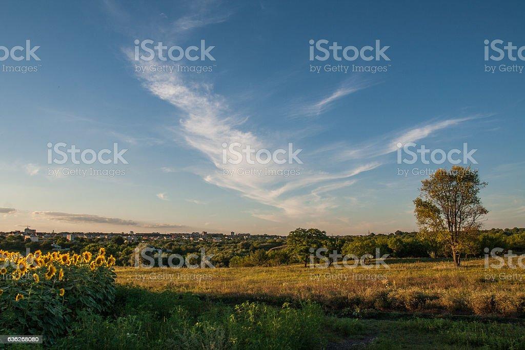 Rural summer landscape stock photo