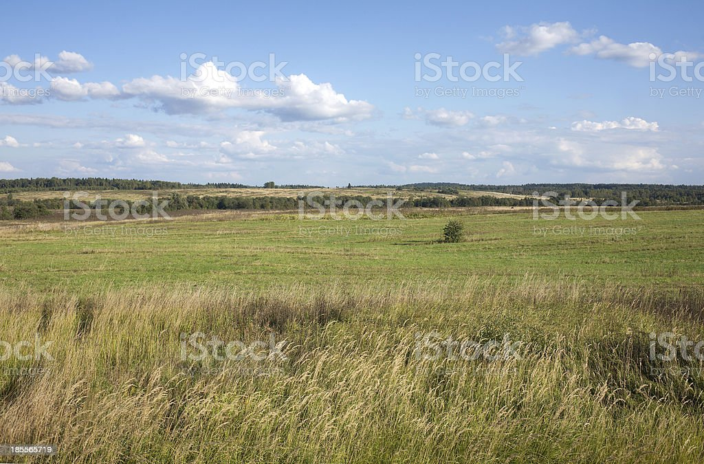 Rural summer landscape with field and forest on skyline royalty-free stock photo