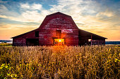 Rural Sunset At This Old Red Barn With Soy Beans Ready For Harvest In Blue Mountain Mississippi