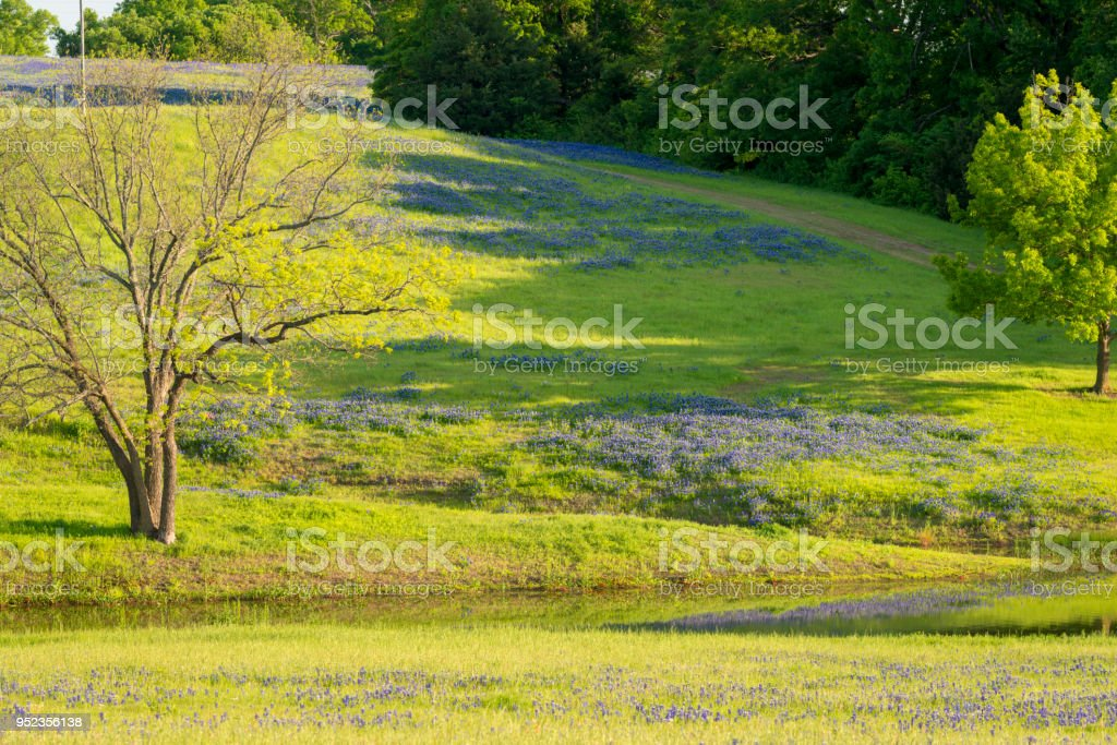Rural Texas Spring Flowers Reflecting On A Pond Stock Photo More