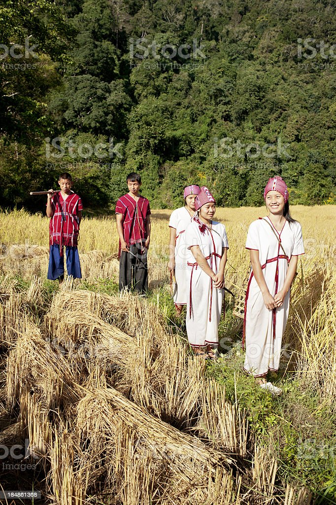 Rural Thailand Rice Harvest Time stock photo