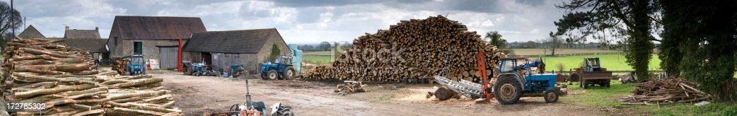 Cut logs in a rural timber yard waiting to be processed under an overcast sky.