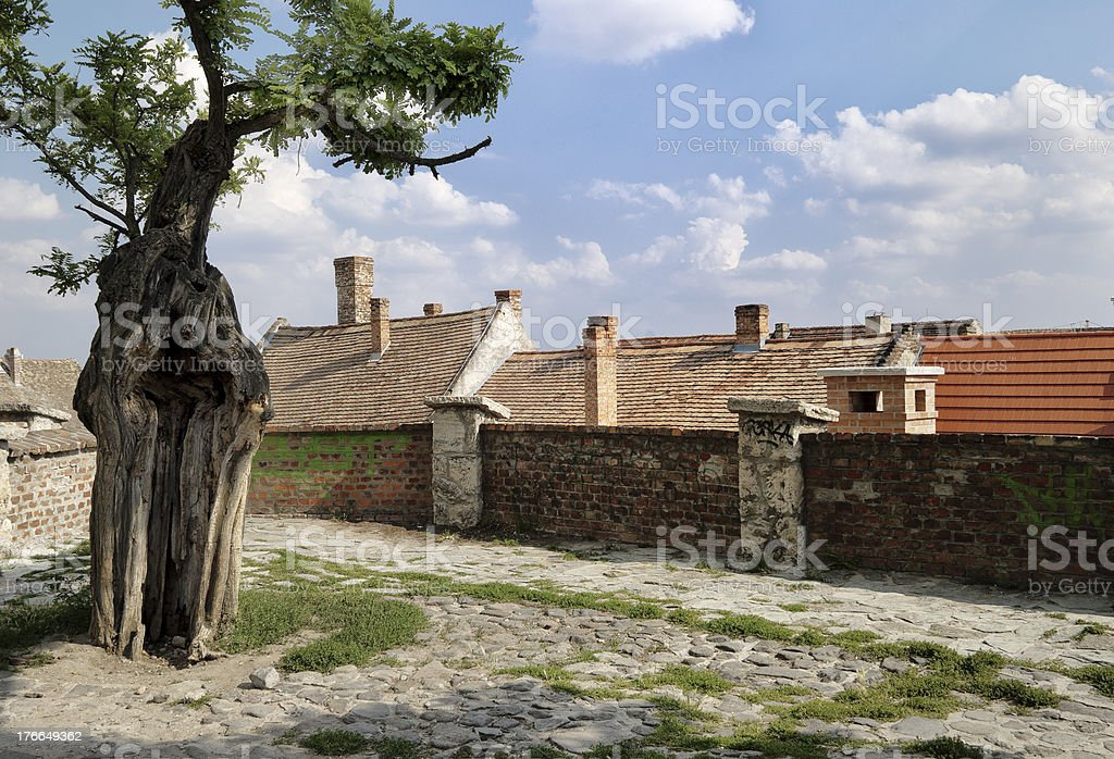 Rural town with tree and roof of homes royalty-free stock photo
