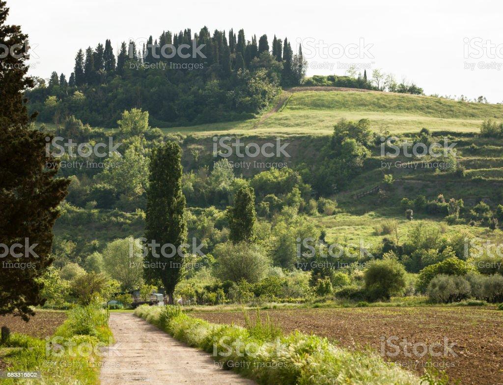 Rural Tuscan Road zbiór zdjęć royalty-free