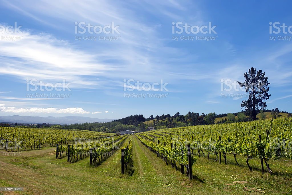 Rural Vineyard Scene, Moutere, New Zealand stock photo