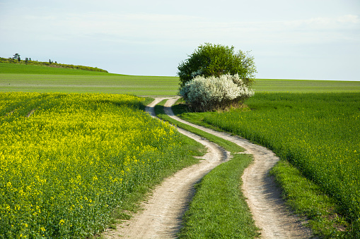 Rural winding road through fields and a blooming bush
