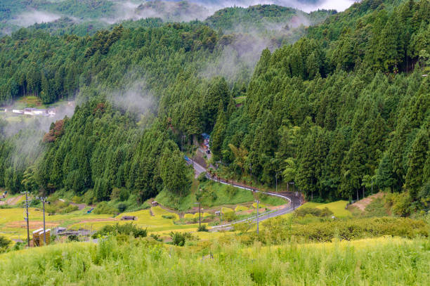 rural windy road among rice fields and forest - satoyama scenery stock photos and pictures