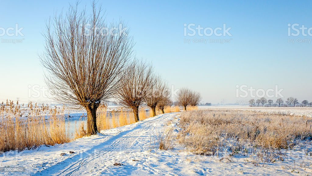 Rural winter landscape in the Netherlands royalty-free stock photo
