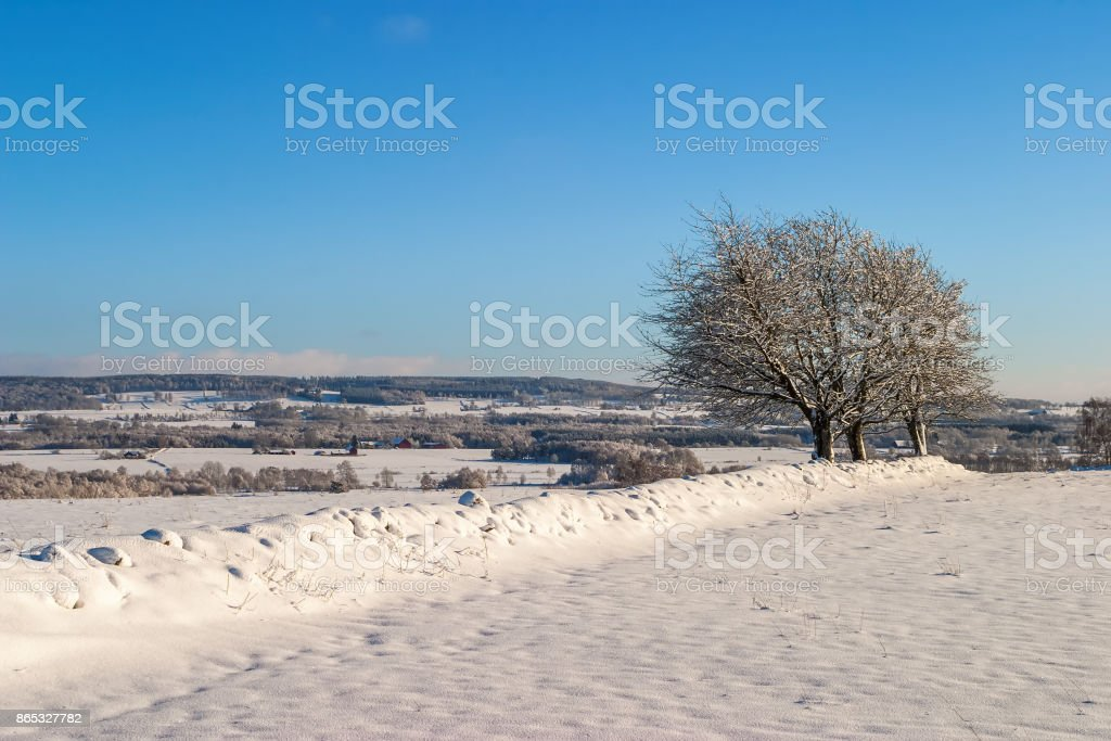 Rural winter landscape with trees on a snowy stone wall stock photo