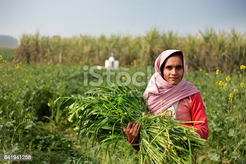 istock Rural women carrying animal silage 641941258