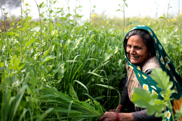 an overview of rural finance for rural women by nkavitha A review of literature on micro finance and women swayam shikshan prayog in micro finance and women changing destiny of rural women.