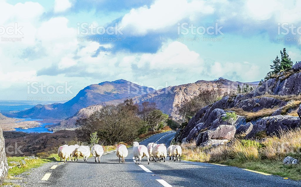 Rush hour in Ireland stock photo