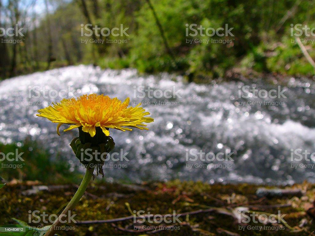 Rushing into Spring stock photo