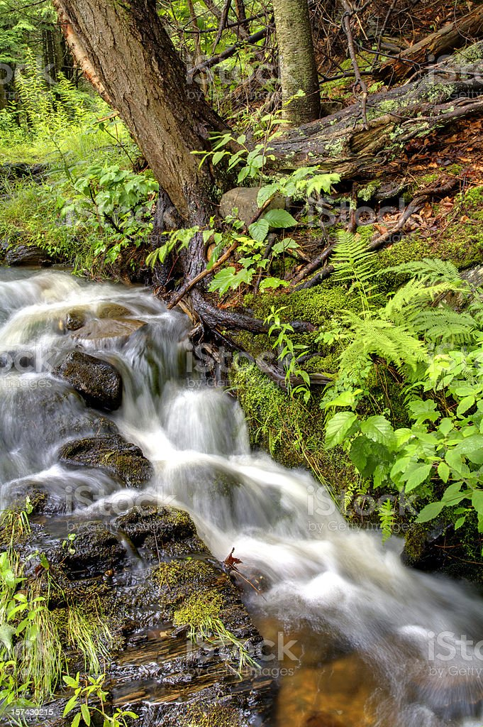 Rushing Stream in the Woods royalty-free stock photo
