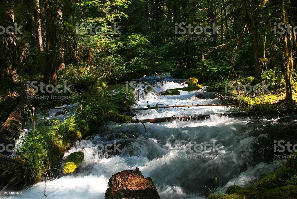 rushing stream stock photo