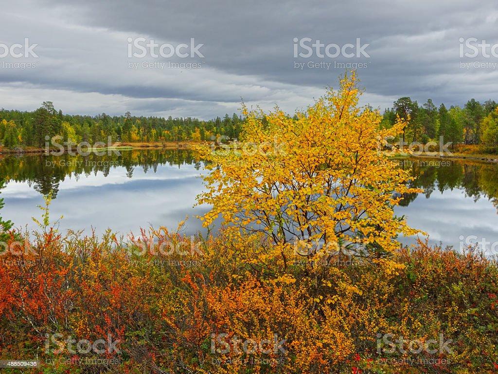 ruska, finnish lapland stock photo