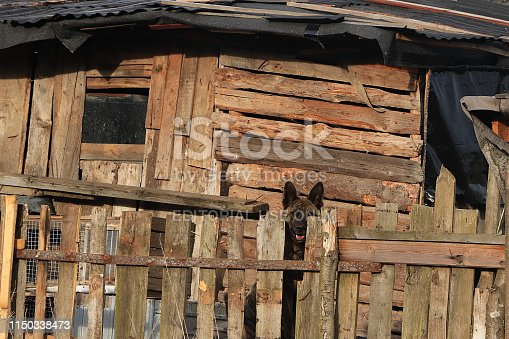 Russia, Leningrad region, May 19, 2019, Russian village. Russian village in the spring and a dog near the booth on a chain of guarded barn. Broken sheds and ruins, falling fence, harsh reality