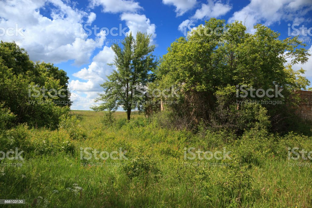 Russia, the Ryazan region (Ryazanskaya oblast), the Pronsky District. The nest of the Lesser Whitethroat in nature. stock photo