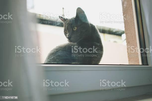 Russian blue cat on a window picture id1162416736?b=1&k=6&m=1162416736&s=612x612&h=zjednr6dwjnxuozqvlxpslzrwfc1ivvygmgssdr95he=