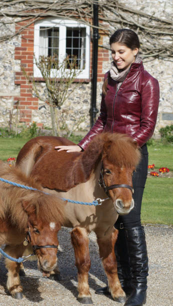 russian outdoor girl standing beside tiny shetland ponies - whiteway pony stock photos and pictures