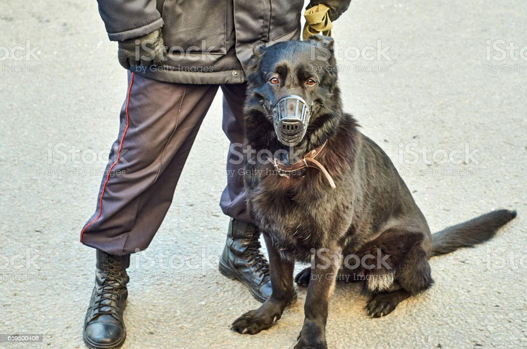 Russian policeman with a war dog stock photo