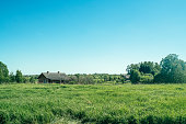 Green field and Russian village in summer day