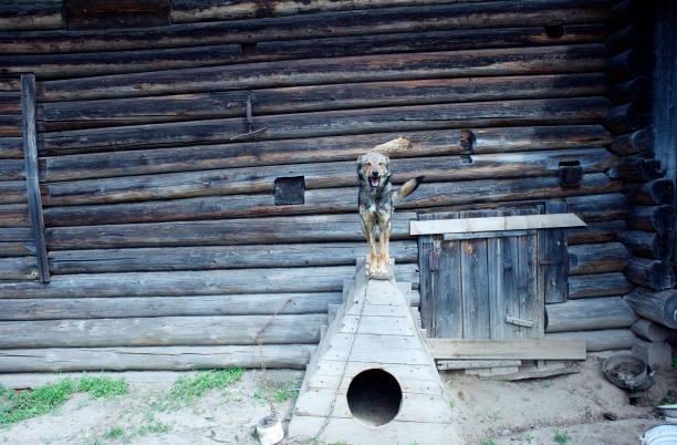 russische village - russisch orthodoxe kirche stock-fotos und bilder